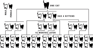 Do The Math Spaying And Neutering Impacts The Numbers