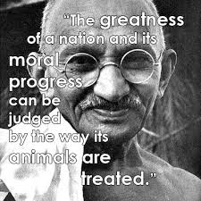 Animal Rights Quotes Awesome Famous Animal Rights Quotes Great Quotes Pinterest Animal