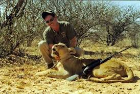 lioness hunting. Contemporary Lioness Hunting Lioness South Africa Prices For Lioness E