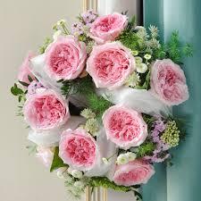 miranda miranda david austin garden rose