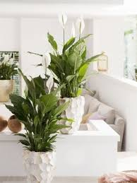 And The Best Part? Its Long, Soft Spikes, Which Can Produce Cascading  Plantlets, Making It A Great Mantelpiece Statement.