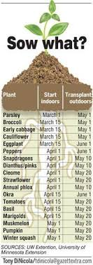 Sowing Time Table Garden Vegetable Garden Plants Herb