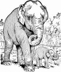 Elephant Coloring Page Elephant Coloring Pages For Adults Elephant