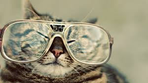 funny cat with gles wallpapers