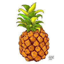 pineapple drawing. pineapple drawing