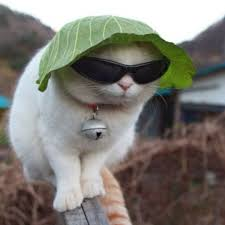 Image result for a cat wearing a funny  hat