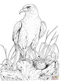 Small Picture Coloring Pages Animals Bald Eagle Coloring Pages For Kids Eagle