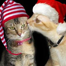 Christmas Gift For Cat Lovers Friends  Cats NeedChristmas Gifts Cats