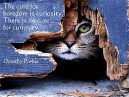 Curiosity Quotes Magnificent Curiosity Quotes The Cure For Boredom Is Curiosity There Is No