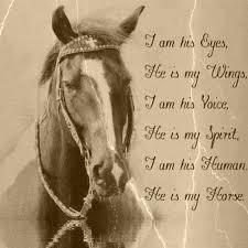 He Is My Horse Horses Pferde Pferde Zitate Und Pferdesprüche