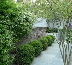 Small Picture Best 25 Buxus ideas on Pinterest Buxus sempervirens Green
