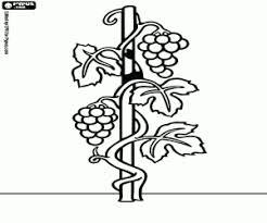 Juegos De Plantas Y Hojas Para Colorear Imprimir Y Pintar
