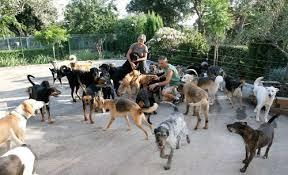 """Résultat de recherche d'images pour """"refuge pour animaux"""""""