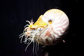 とっても有名な深海生物