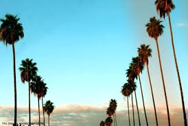 palm trees tumblr. Wallpaper Palm Trees Tree Amazing Wallpapers Tumblr Iphone .