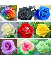 Rose Seeds Mix Rainbow Pink Black White Red Purple Green