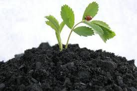 Risultati immagini per piante per aereofagia