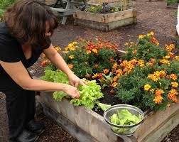 Fall Gardening Tips  Grow Compost Of VermontFall Gardening