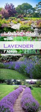 Landscaping Design Ideas For Front Of House Landscaping With Lavender