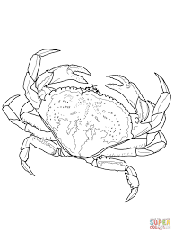 Small Picture Coloring Pages Animals Dungeness Crab Coloring Page Hermit Crab