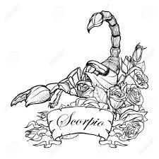 detailed realistic scorpio in a decorative frame of roses sketch isolated on white background concept art for tattoo design horoscope coloring book for