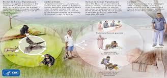 Image result for ebola