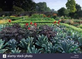 Ornamental Kitchen Garden Parham Sussex Walled Ornamental Kitchen Garden Kale Red Bor Caulo