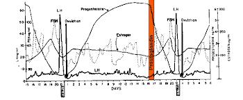 Bovine Estrous Cycle