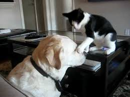 cats and dogs playing. Simple And Cat And Dog Play Fighting With Cats And Dogs Playing C