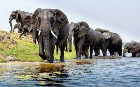Elephant HD Wallpapers Backgrounds ...
