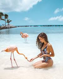Bringing one happy island of aruba to the world. Flamingo Beach Aruba Is It Really Worth It Stay Close Travel Far
