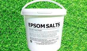 epsom salts garden use salt on your lawn for greener grass epsom salts garden uses