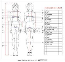 77 Described Bicep Measurement Chart