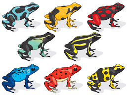 Small Picture Yellow Banded Poison Dart Frog Coloring Page Free Printable