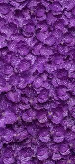 Purple Flowers Backgrounds Phalaenopsis Many Purple Flowers Background 1125x2436
