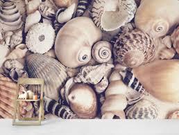 Seashell Collection Wall Mural