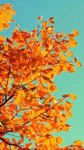 50+] iPhone 6 Autumn Wallpaper on ...