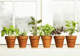 15 top tips for kitchen herb gardens