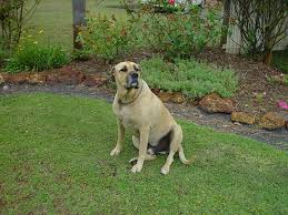 get rid of dog urine smell in yard