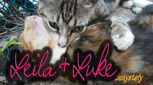 sweet cat love. Unique Cat LoVe  LOVE  Sweet Cat Cats Cute Relax  In Love S