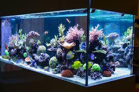 incandescent florescent compact metal halide or led for aquariums r fish health