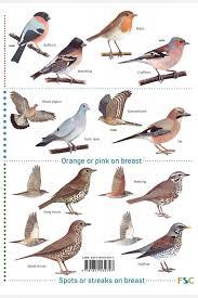 Garden Birds Field Studies Council