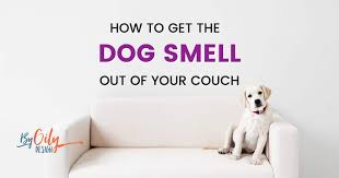how to get dog smell out of your couch