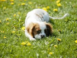 DOGS FREE IMAGE க்கான பட முடிவு