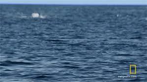 """Afbeeldingsresultaat voor gif """"de zee"""""""