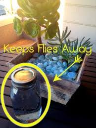 no flies zone deter flies without a fly trap fly traps jar