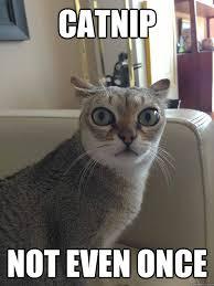 Catnip Not even once - Misc - quickmeme via Relatably.com