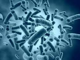 Probiotic Student Internship