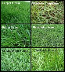 Grass Identification Chart Uk Grass Types Lawn Safechaos Net