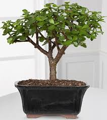 As the weather begins to get cooler we can prolong summer -- and bring a  little bit of green inside -- by using Feng Shui indoor plants